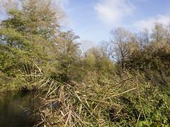 20151031-GR010844-Edit (fleetingphotons) Tags: river ricohgr kennet wasingestate warrenbeat