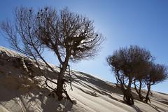 Naturaleza muerta ? / Dead nature ? (José Rambaud) Tags: blue sky skyscape landscape andalucía dune bluesky paisaje duna cádiz tarifa straitofgibraltar valdevaqueros estrechodegibraltar parquenaturaldelestrecho