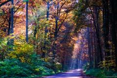 Autumn Valley (ralf.kerkhoff) Tags: deutschland herbst jahreszeit natur nrw bume deu naturpark botanik hohemark reken