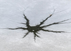PATTERNS IN THE ICE (5816OL) Tags: dad zoos zoo2015