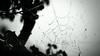 Hello Darkness My Old Friend... (Philip R Jones) Tags: web spider spidersweb dew wet silhouette bw blackandwhite cooltones dark abstract paulsimon soundofsilence gettyoct2016