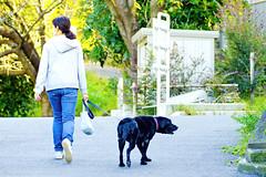 Walk with The Dog :  (Dakiny) Tags: 2016 autmn october japan kanagawa yokohama aoba ichigao obacho outdoor city street park obakayanokipark people woman creature animal pet mammal dog labrador retriever labradorretriever nikon d7000 sigma apo 70200mm f28 ex hsm apo70200mmf28dexhsm sigmaapo70200mmf28dexhsm nikonclubit