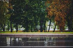 First Snow | Kaunas #295/365 (A. Aleksandraviius) Tags: first snow kaunas fall autumn wet leaves leaf lithuania rain lietuva nikon nikkor 85mm 85 365 3652016 d810 nikond810 85mmf14g nikkor85mm nikon85mm14g f14g nikon85mm project365 295365