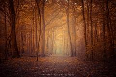 Autumn fog (fotos_by_toddi) Tags: rot fotosbytoddi voerde niederrhein nrw nordrhein westfalen wolken sony sonya7 sun sky bume baum tree herbst herbstlich outdoor pflanze lights licht light lichter sonne a7 alpha7 autumn nebel deutschland germany
