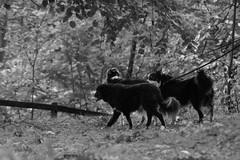 Tillsammans (tusenord) Tags: fotosondag hund fs161002 svartvitt blackandwhite monochrome bw dog pet