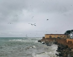 Arriva il brutto tempo a #Cadiz e con il mare in burrasca c' chi se la gode e trova un sacco di cibo tra le onde. Chi invece sta sulla terrazza (noi) si gode la forza del mare e i colori del cielo che cambia ogni 2 minuti. (Viaggio Vero) Tags: photo instagram flickr viaggiovero travel viaggio