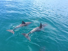Tails (petes_travels) Tags: tail jervis bay new south wales australia