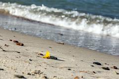 (klgfinn) Tags: autumn balticsea landscape leaf sea shore water wave
