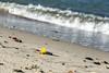 Осень на берегу (klgfinn) Tags: autumn balticsea landscape leaf sea shore water wave балтийскоеморе берег вода волна лист море осень пейзаж