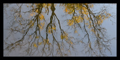 Autumnal Reflections (Margaret Edge the bee girl) Tags: chesterfieldcanal water autumn trees reflections sun blue sky outdoors branches upsidedown nottinghamshire