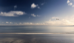"""...""""In to the Misty Morning Sun"""" (Bruus UK) Tags: looe cornwall seagull beach sea sand water coast seascape blue calm calmness clouds blurry motion horizon flight waves gentle alone solo glide sunlight"""