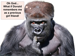 Gorilla surprise5 (Robin Hutton) Tags: trump robinhuttonart artwork donald gorilla