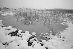 Joensuu - Finland (Sami Niemelinen (instagram: santtujns)) Tags: joensuu suomi finland luonto nature jrvi lake pyhselk kuhasalo talvi winter lumi snow j ice frozen bw monochrome mustavalkea blackandwhite landscape maisema
