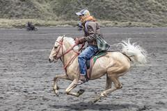 Caldera cowboy (Hans Makkee) Tags: horse galop gallop paard tengercaldera bromo java indonesia