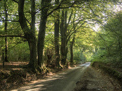 road through the Crab Wood, near Winchester, UK (neilalderney123) Tags: 2016neilhoward trees winchester road olympus omd hampshire