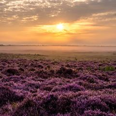 DSCF5318-HDR (Neal_T) Tags: beauty bracketed clouds colour colourfull countryside fog foggy fuji fujifilm hdr heather hills kingslynn landscape mist mounds nature naturereserve norfolk norfolkwildlifetrust outdoors purple roydoncommon sky sunrise wildflowers xt1