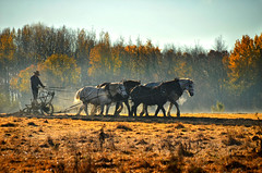 Amish Farmer Plowing (James Korringa) Tags: amish stanton michigan workers outdoor farmer horses plowing field explore