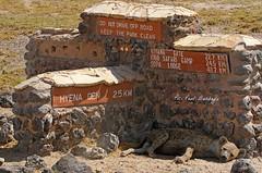 Hyena, Claiming this spot for his Den. (welloutafocus) Tags: hyena africa predator shade sleeping