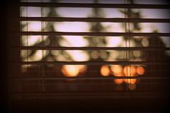 Morning (Tracy Christina) Tags: blinds morning sunrise trees cold november saskatoon saskatchewan canada
