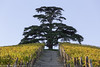 Le Langhe (beppeverge) Tags: barolo beppeverge colline dolcetto grapes italy landscape langhe moscato paesaggio roero uva vigna vigneti vineyard vino vitigni wine