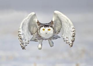 Ibird Canada