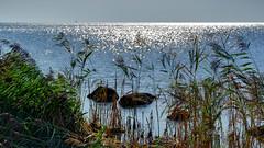 AN Rgens Steilkste (seyf\ART) Tags: rgen landschaft landscape kste coast mecklenburg ostsee balticsea