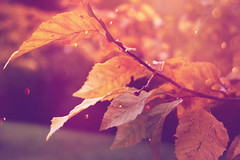 (frogghyyy) Tags: purple autumn autunno foliage fogliame fall trees woods macro macrophotography canoneos1000d canon dreamy natur nature natura natureshot november december details naturephoto soft winter outdoor