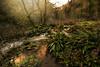 Primevel Chee Dale (PentlandPirate of the North) Tags: cheedale monsaltrail primeval gorge peakdistrict derbyshire river wye