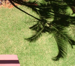 Cerrado palm trees (saudades1000) Tags: palm palmtrees cerrado