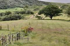 Flores no campo (pmenge) Tags: flores cerca árvore 70200 parqueestadualdapedradaboca 7dii