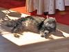 IMG_4469 (d_fust) Tags: cat kitten gato katze 猫 macska gatto fust kedi 貓 anak katt gatito kissa kätzchen gattino kucing 小貓 고양이 katje кот γάτα γατάκι แมว yavrusu 仔猫 का skorpi बिल्ली बच्चा