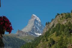 Le Cervin ou Matterhorn 4478 m (CH) (Annelise LE BIAN) Tags: sunshine suisse vert bleu damn zermatt matterhorn paysages cervin cervino coth supershot alittlebeauty fantasticnaturegroup coth5 neigeetglace
