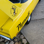Big yellow bird thumbnail