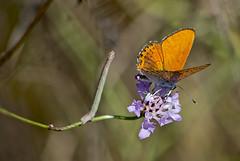 give the way! /  ! (katunchik) Tags: butterfly bulgaria schmetterling bulgarien bulharsko