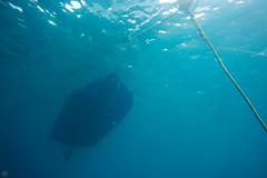 20150829-DSC_0899.jpg (d3_plus) Tags: sea sky fish beach japan scenery underwater diving snorkeling  shizuoka    apnea izu j4  waterproofcase    skindiving minamiizu       nikon1 hirizo  1030mm  nakagi 1  nikon1j4 1nikkorvr1030mmf3556pdzoom beachhirizo misakafishingport  1030mmpd nikonwpn3 wpn3