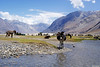Bloated (Sid's Corner) Tags: travel india mountains nature beautiful landscape landscapes paradise donkey adventure leh ladakh nubravalley bloated nationalgeographic heavenonearth hunder northindia tripofalifetime nubra diskit incredibleindia natureaddict
