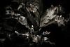 BWPA Highly Commended - Kittiwake Colony (markrellison) Tags: sea wild bird scotland unitedkingdom britain iso400 wildlife seagull gull 300mm fulmar shetland lerwick guano seabirds nesting gannet lightroom f40 guillemot noss bressay shetlandislands 11600sec ef300mmf28lisusm lrcc canoneos5dmarkiii lightroomcc