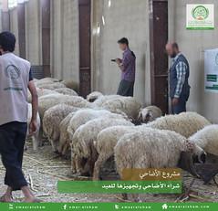 تجهيز الأضاحي 1 (emaar_alsham) Tags: emaar العيد الشام alsham تجهيز اعمار شراء أضاحي اضاحي emaaralsham