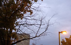 I Will Follow You Into The Dark (jessrawk) Tags: morning autumn trees light red sky orange building tree fall lamp leaves lines buildings grey maple streetlight soft branch glow streetlamp ominous branches ottawa earlymorning lookup fallingleaves trunk glowing 365 straight baretree crooked creep creeping mapleleaves winteriscoming leavesfalling 282 ominoussky earlyam barebranch autumnshere theinevitabilityofdeath twoeightytwo twohundredandeightytwo slatecolouredsky