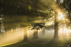 Eternal Light (JRTurnerPhotography) Tags: park city uk greatbritain autumn trees england sunlight mist london fall nature leaves fog sunrise canon woodland print landscape photography dawn morninglight photo photographer image branches picture richmond surrey photograph sunrays autumnal richmondpark britishcountryside royalpark ldn capitalcity landscapephotography greaterlondon jaketurner canon5dmarkiii jrturnerphotography