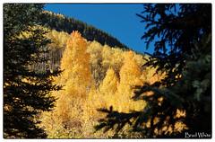 DSC_8420_DxO_1200 (white.brad1614) Tags: fall zeiss landscape nikon colorado apo 55mm otus d800e