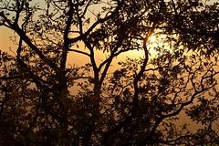 Tramonto in Pratomagno (fotografia per passione) Tags: autumn sunset forest tramonto herbst autunno casentino foresta pratomagno valdarno lorociuffenna leforestedelpratomagno marksoetebierphotography