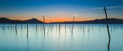 Bosque inundado (Alfredo.Ruiz) Tags: sunset canon arbol atardecer pantano alava seco ef1740 eos6d
