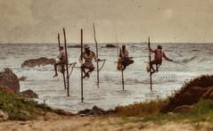 Tenacity (Saint-Exupery) Tags: leica sea mar srilanka pescadores welingama stillfishermen