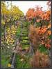 Gräser im Weinberg (almresi1) Tags: autumn germany vineyard herbst bunt weg weinberg stufen treppen remstal strümpfelbach weinsatdt