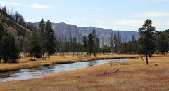 A River In Yellowstone (Robert F. Carter) Tags: landscape river rivers yellowstone yellowstonenationalpark nationalpark nationalparks log logs ourbeautifulworld passiton crookedtreephotographicsociety robertcarterphotographycom ©robertcarter ngc