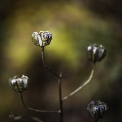 Candlabre (JardinsLeeds) Tags: autumn photoshop automne couleurs autumncolors couleursdautomne lightroom nikkor105mm candlabre nikond800e