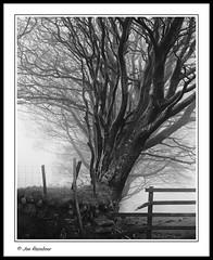 Tree Line (Joe Rainbow) Tags: trees bw mist film fence landscape mono hedge dartmoor beech delta400 mamiyarz67proii
