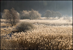 (aledue) Tags: trees alberi soe trentino autofocus greatphotographers pinè nikond80 flickraward platinumheartaward bestcapturesaoi aledue elitegalleryaoi sternigo paludidisternigo