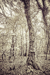 Don't leave me this way... (Lune Shadows (Larry Williams)) Tags: trees sunlight leaves moss woods branches ivy bark trunk ferns